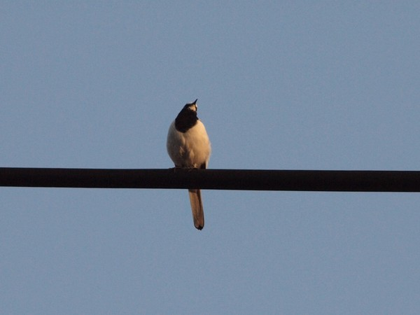 ○鳥.jpg